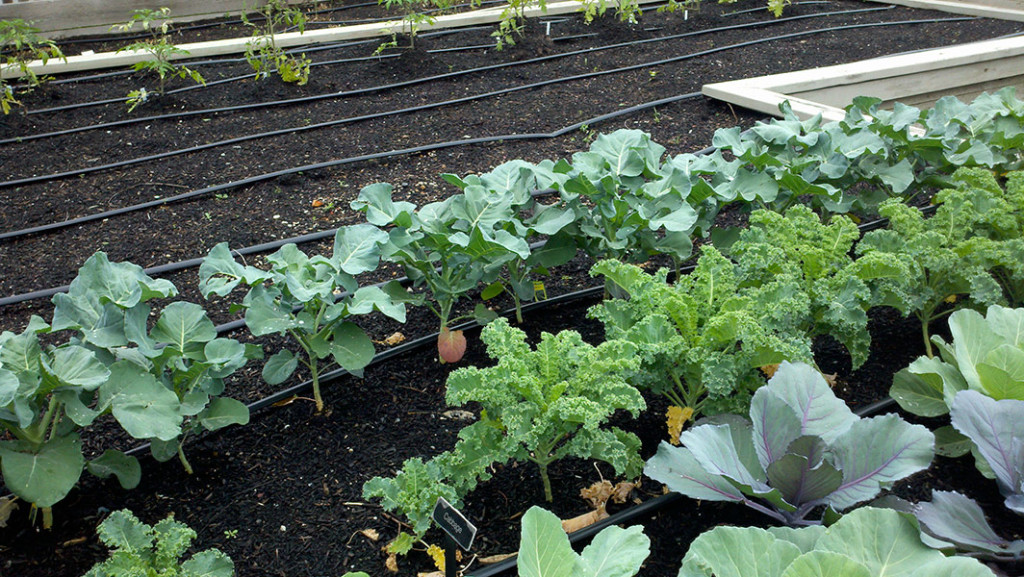 Top 20 Fall/Winter Vegetables To Grow This Season