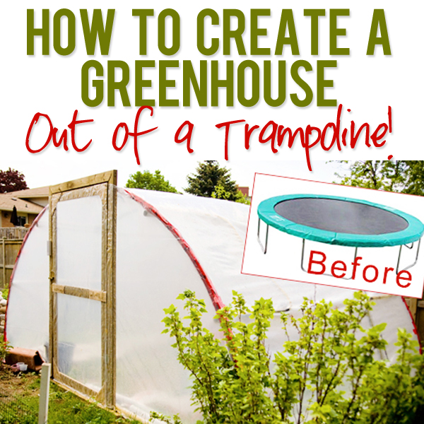 Trampoline DIY Greenhouse
