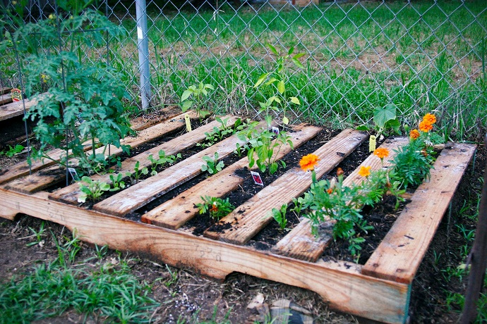 Veggie pallet garden for Gardening using pallets