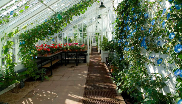 The Soil, Air, Light and Space in Your Greenhouse