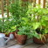 vegetables to grow in container