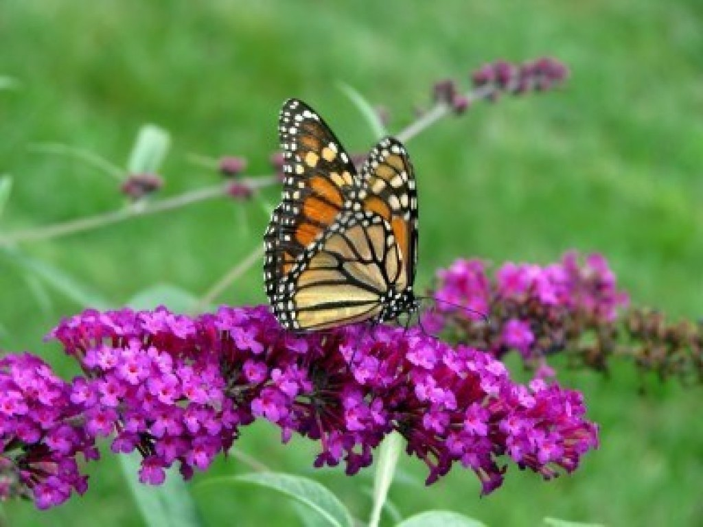 10 colorful and rich nectar flowers that attract for Butterfly in a flower