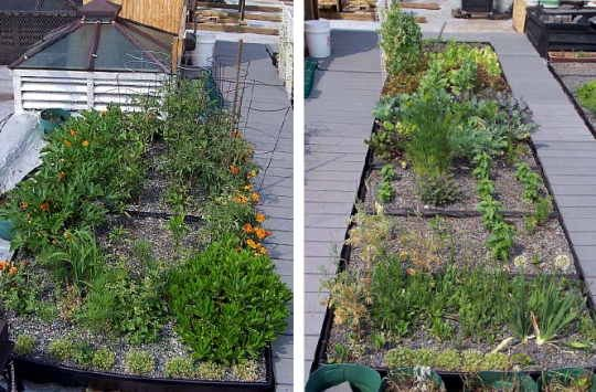 Cooking Enabled Rooftop Garden