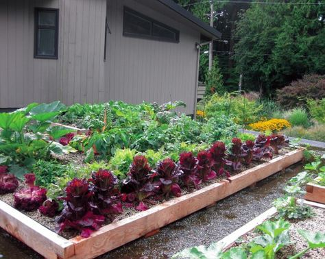 Edible rooftop garden