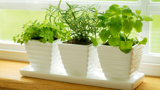 10 famous and easy herbs to grow indoor during winter make - Best herbs to grow indoors ...