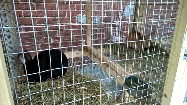 Sectional DIY Rabbit Hutch