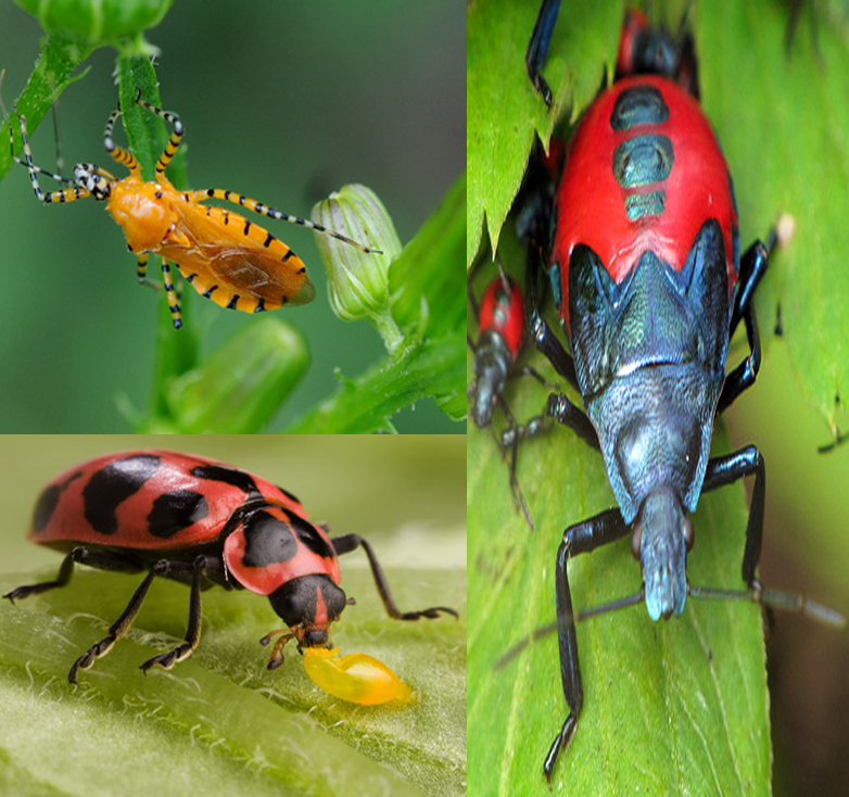Top 12 Beneficial Insects For Garden-How They Help Plants