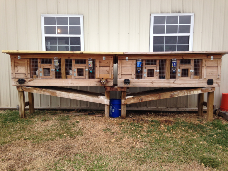 DIY Rabbit Hutch With Automatic Poop Collector