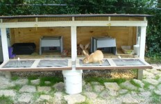 rabbit hutch1
