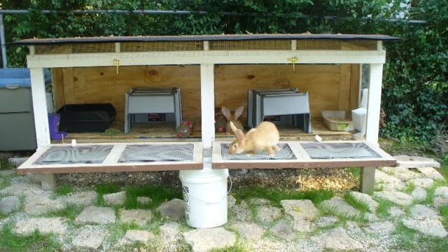 10 free rabbit hutch building plans and designs the self for Rabbit hutch blueprints