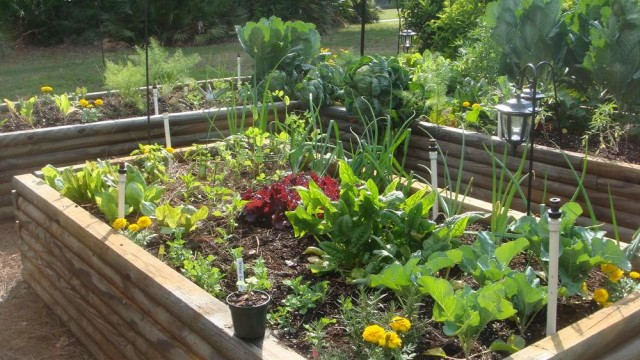 Spring Gardening Best Vegetables To Plant In Spring The