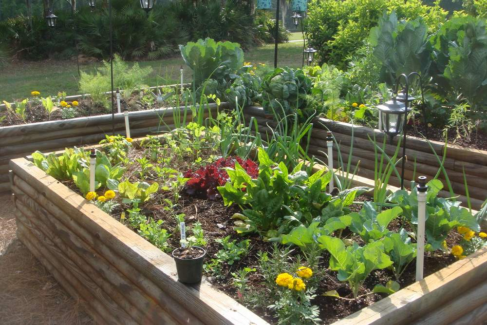 Spring Gardening – 10 Best Vegetables To Plant In Spring – The Self ...