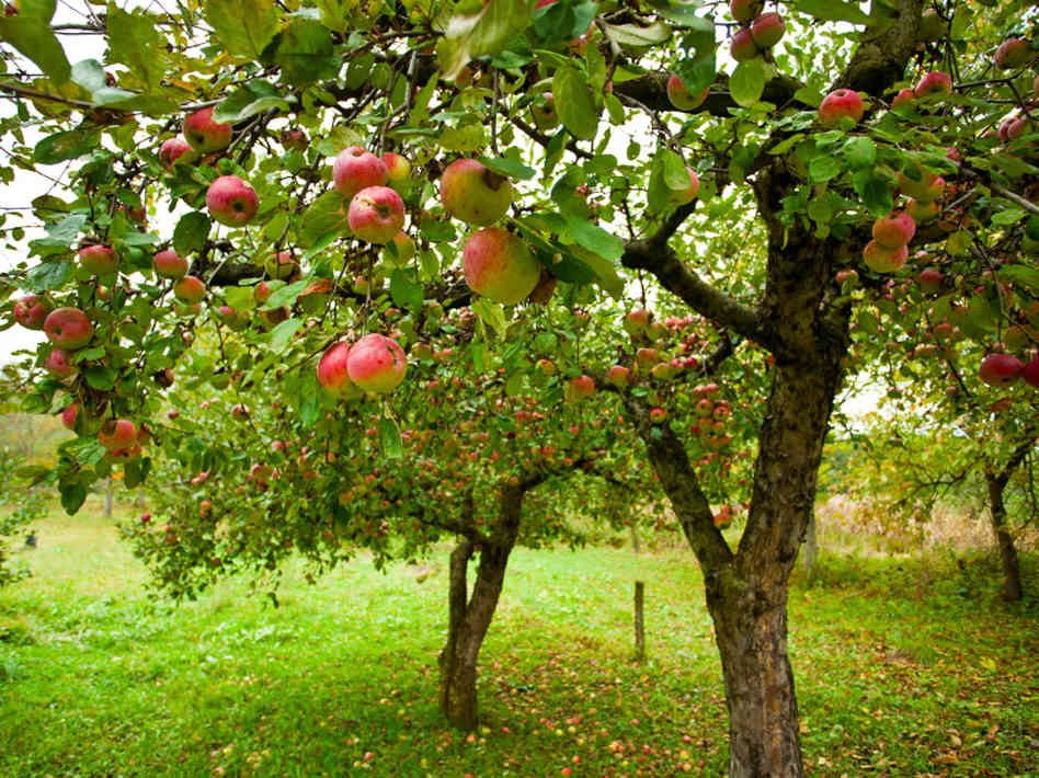 12 Fast Growing Vegetables And Fruit Trees For Your Home