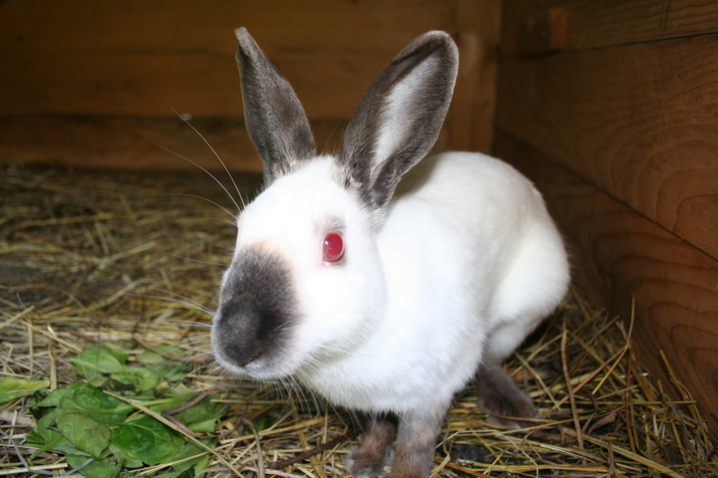 10 Popular And Cute Rabbit Breeds That Are Raised As Pets