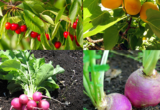 12 fast growing vegetables and fruit trees for your home garden - Trees For Home Garden