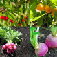 fast growing vegetables and fruit trees5