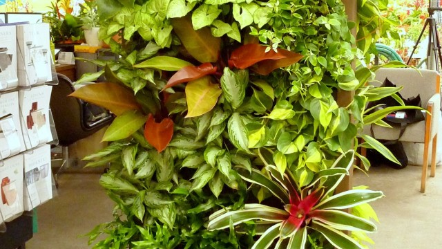 10 Best and suitable plants for vertical garden – Best Garden Plants