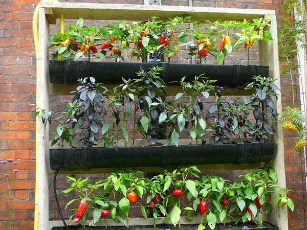 The red chili rain gutter garden