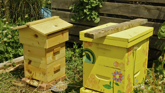 10 Free Beehive Plans For Backyard Beekeeping The Self