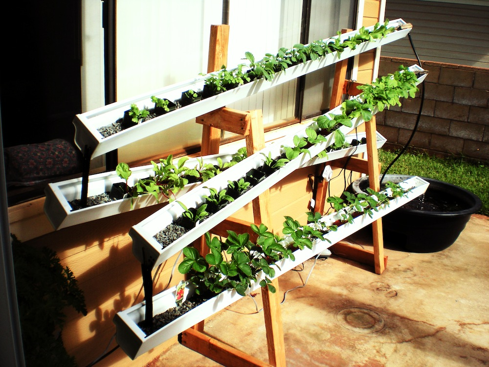 Aquaponics or self watering rain gutter garden