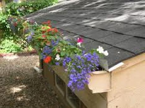 seasonal flowers in rain gutters