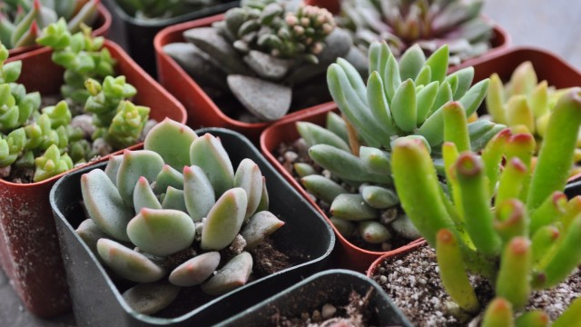 Indoor Succulents 10 Easy Tips On How To Grow