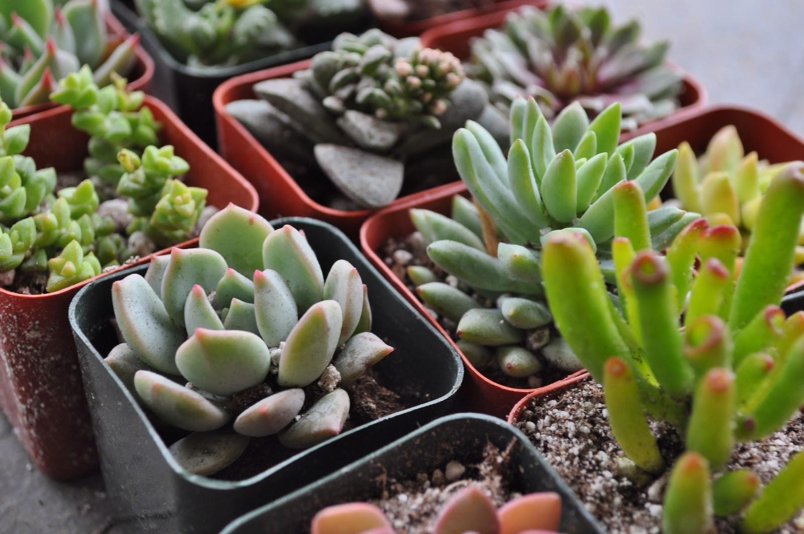 Do It Yourself Home Design: Indoor Succulents-10 Easy Tips On How To Grow Succulents