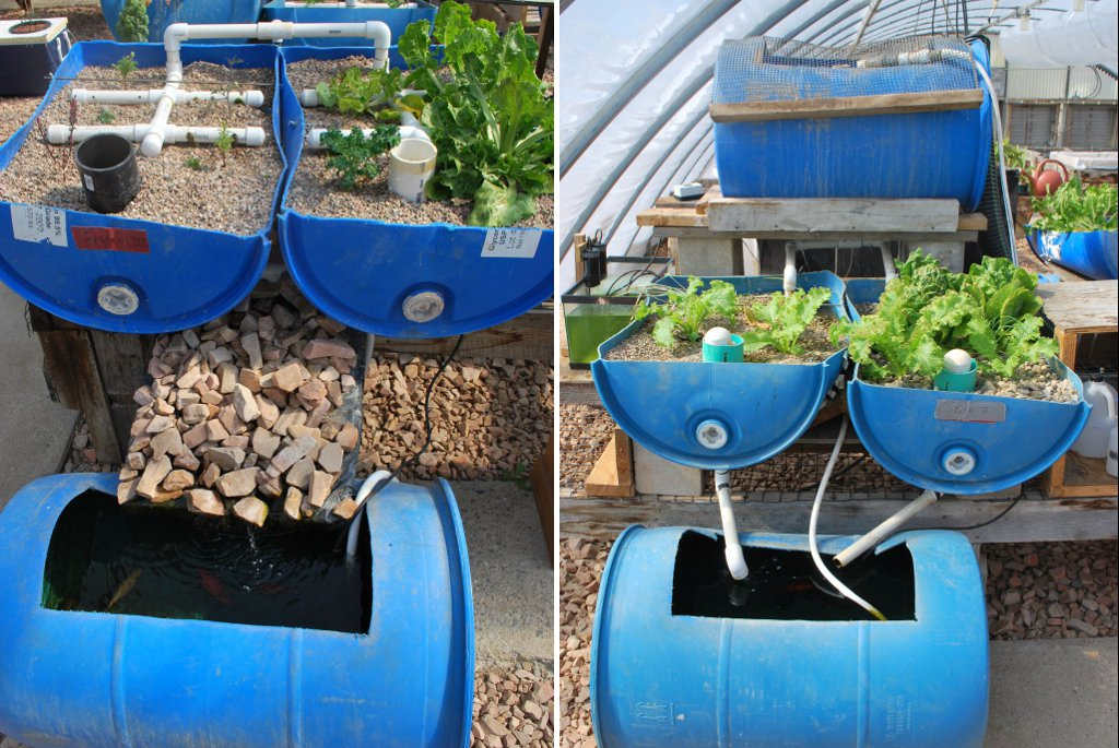 Aquaponic System With Garden Scraps