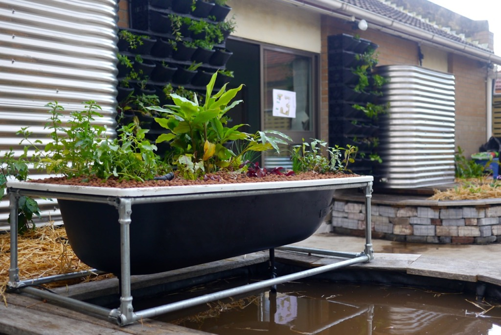 Bathtub Aquaponics System