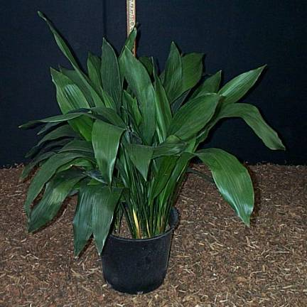 10 Best Low Light Houseplants That Are Easy To Grow The