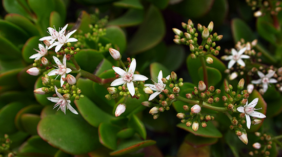 8 Most Common Types Of Succulents Plants For Home The