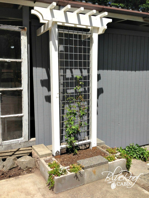 Trellis Gardening Ideas Part - 15: It Can Be An Old Door Or Wall, As Per Your Wish. Make Sure You Dig In 3  Inches And Then Fix The Frame In The Soil. It Can Be Ideal Cucumber Trellis  Too.