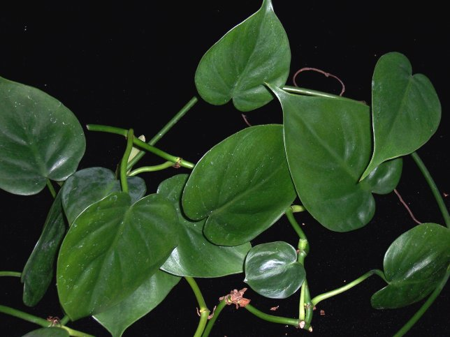 10 best low light houseplants that are easy to grow the for Easy to grow houseplants