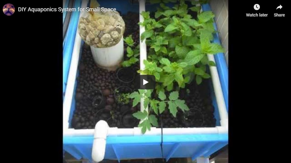 Small and Effective DIY Aquaponics