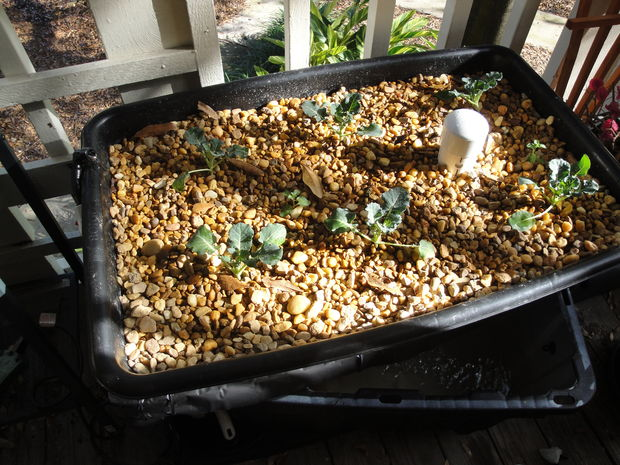 Small and effective aquaponic