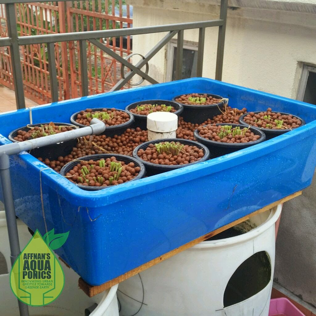 Small or Large Aquponic System
