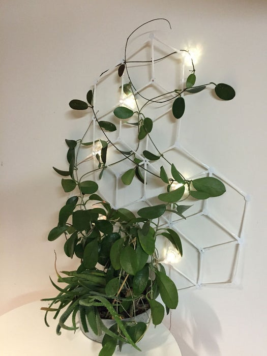 Strawbee Mood Light Trellis