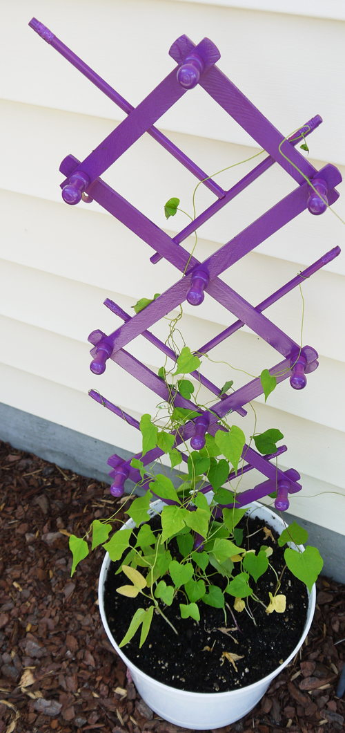 Super cheap trellis