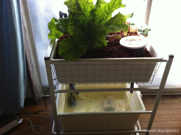 Sustainable Indoor Aquaponics system