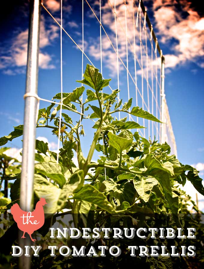 15 inspiring diy garden trellis ideas for growing climbing Tomato garden design