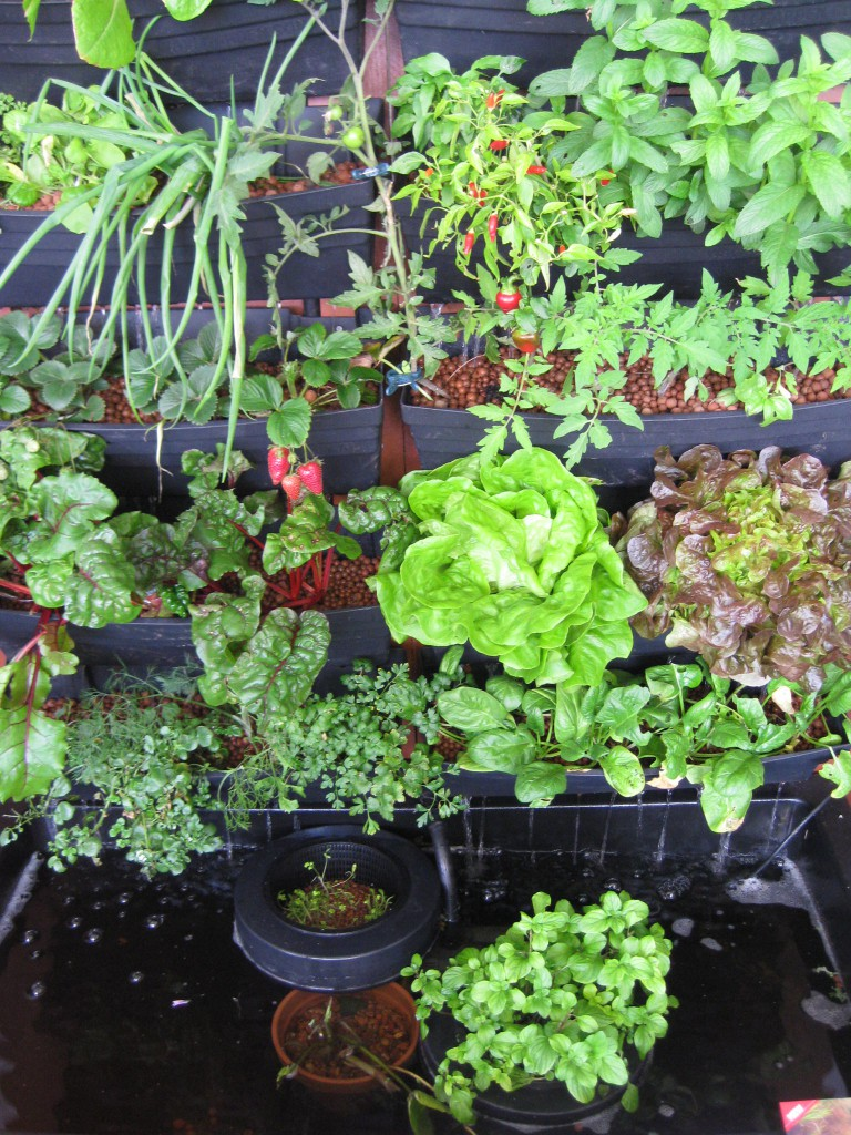 12 diy aquaponics system for indoor and backyard the for Indoor gardening design