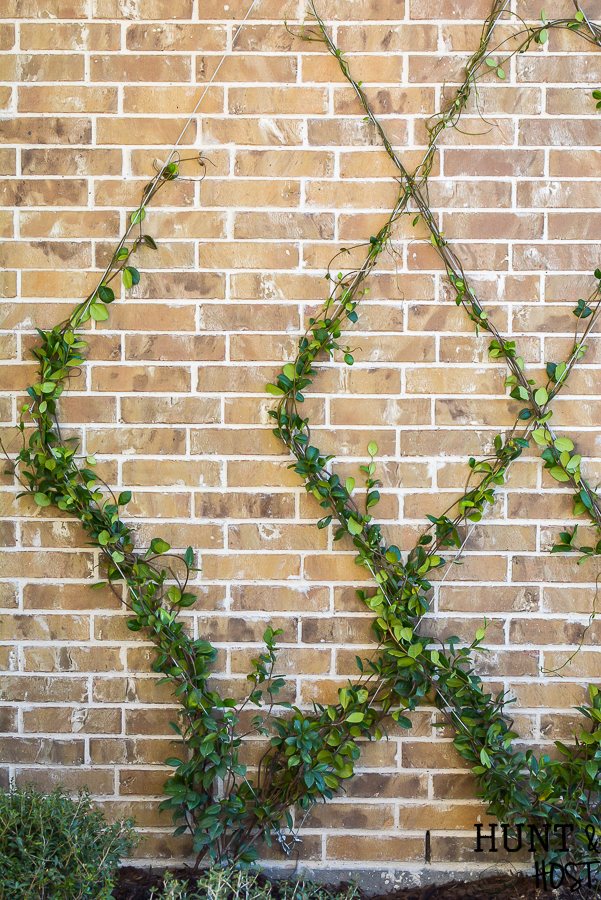 build a grape vine trellis