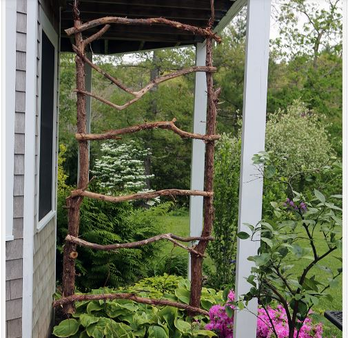 build a rustic grape vine trellis