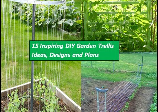Pin pvc cucumber trellis on pinterest for Garden trellis ideas