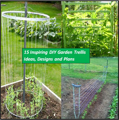 Amazing 15 Inspiring DIY Trellis Ideas For Growing Climbing Plants