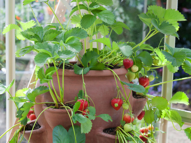 Do It Yourself Home Design: 10 Useful Tips For Growing Strawberries In A Pot