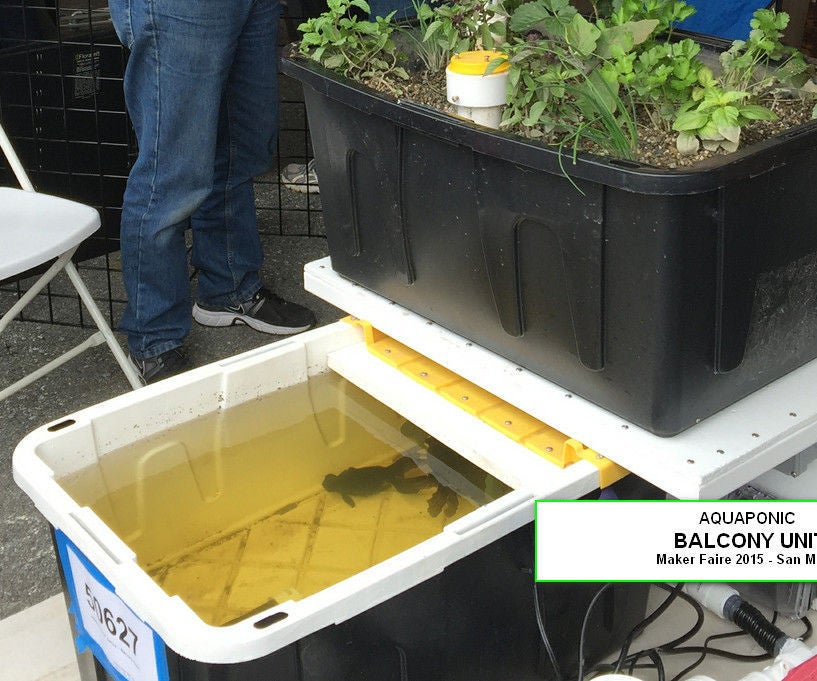 homemade aquaponics system