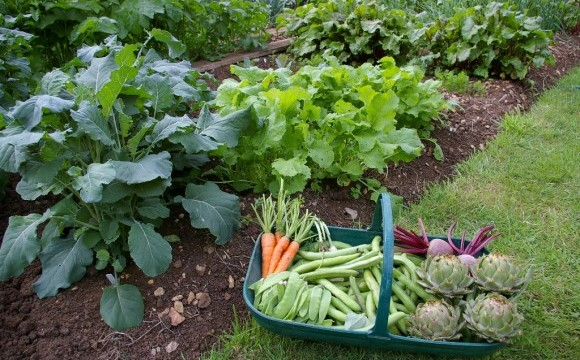 Lovely Top 12 Vegetables And Herbs That Grow In Shady Garden