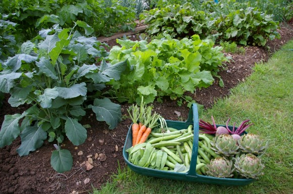 shade loving vegetables and herbs