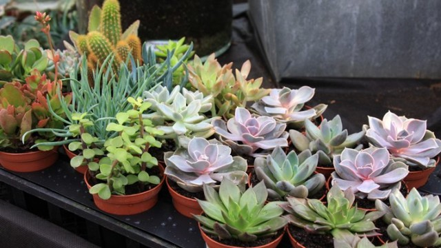 succulents house plants
